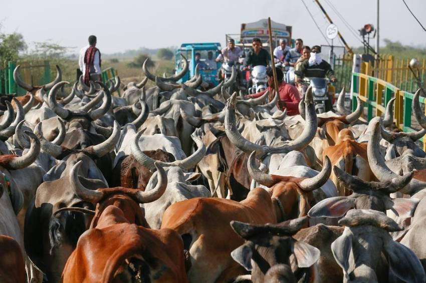 matforgiftet i india